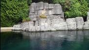 Аквариумът във Ванкувър (hd)