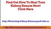 Herbs For Kidney Disease, Symptoms Of Kidney Disease, Types Of Kidney Disease, Stage 2 Kidney Diseas