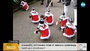 Пингвини в коледна премяна