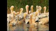 Животински свят на България част 2 птици
