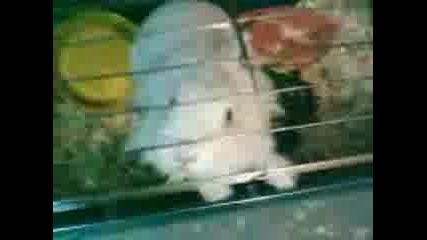 Най - Сладкото Зайче 2