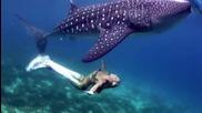 Русалки танцуват с акули, китове, скатове, делфини...