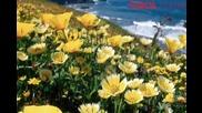 Цветелина - Цвете да съм