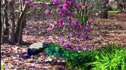 Los Angeles - Botanic Garden