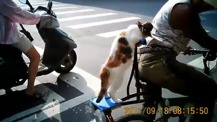 Cat Wearing Hat On Bicycle