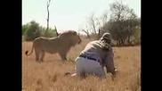 Човек Оцелява Срещу Лъв