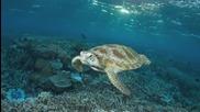 Chill Turtle Takes GoPro on Leisurely Swim