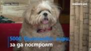 Британско куче се шири в умален модел на замъка Уиндзор