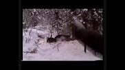Лов на Мечки с Лайки 1