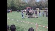 коне попинци 1май 2012