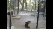 Маймуни И Смехь.3gp