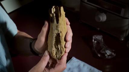 Птерозавърът Преранодон