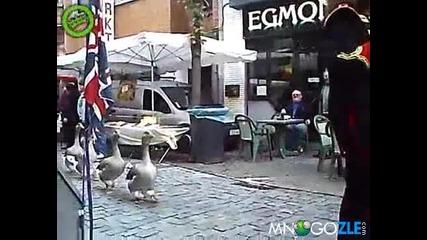Парада на патките