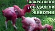 Изкуствено създадени животни от хора!