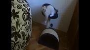 Котето Ми Играе
