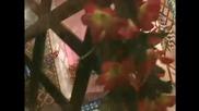 Andrijana Dabetic Anci - Berane, Berane (StudioMMI Video)