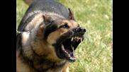 Топ 10 кучета-пазачи
