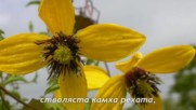 Какви цветя възпява Петко Славейков в поемата си Изворът на Белоногата