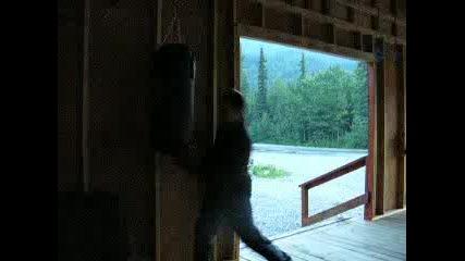 Бокс Тренировка - Горката Круша