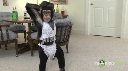 Смях ! Маймуни работят на лаптоп и танцуват