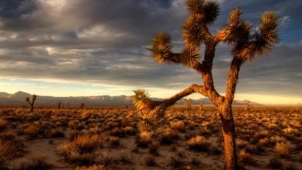 Chicane - Mojave