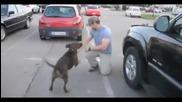куче полудява като вижда своя стопанин които се връща от мисия