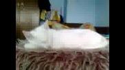 сладко коте спи