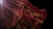 Mile Kitic - Rakija ( Official Video 2013) Hd