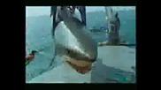 Човек излиза от устата на жива акула