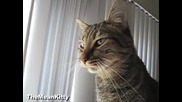 Прозяването на котката показано в забавен кадър