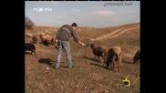 Интервю с... овца