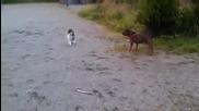 Котка плаши лошо куче