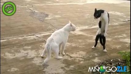 Котка се прави на Джет Лии
