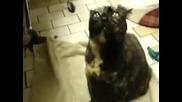 Луда котка призовава дявола ! Котка - екзорсист !