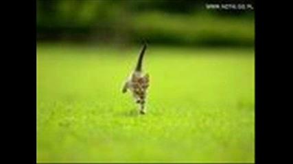 Morandi - Angels [cat Picture]