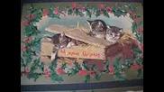 Котешка Коледа ( Весели Празници )