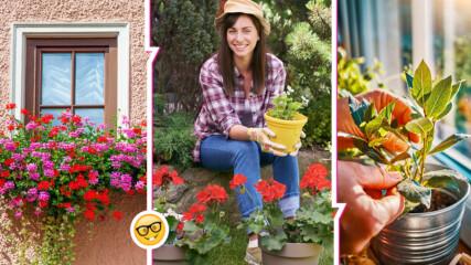 Трябва да ги имате вкъщи: невероятните ползи на тези стайни растения