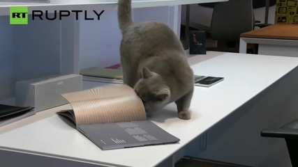 Worker Cats Take Over an Office for World Animal Day
