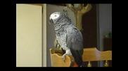 Руби, Говорещият Папагал (със Субтитри)
