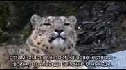 Планетата Земя - Спасяване на видовете - Bg subs - част1/3