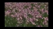 Wofgang Amadeus Mozart - Серенада №13