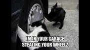 Много Смешни Котки