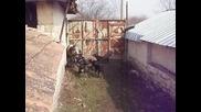 български лудогорски гончета
