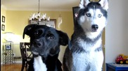 Мишка и Моки - 2 смарт кучета