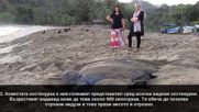 10 интересни факта за костенурките