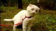 Коте прави смешна физиономия докато яде трева!
