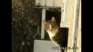 Фриран котка