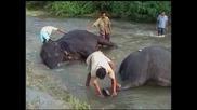Слонска баня
