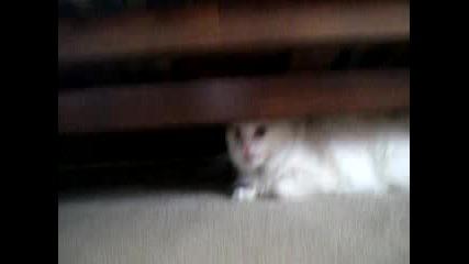 Разярена Котка
