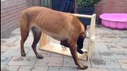 Отлична играчка за кучета в двора